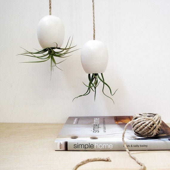 Hanging AirPlant Pod (tm) - Silky Matte White