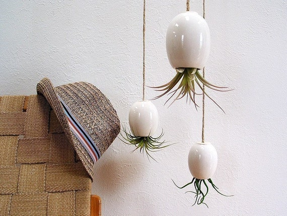 Hanging Air Plant Pod Planter (tm) TRIO  - Gorgeous Glossy White and 3 free air plants