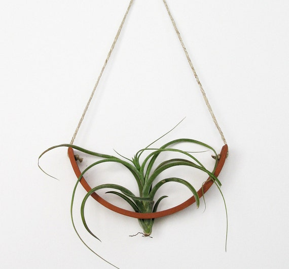 NEW Hanging Air Plant Cradle (tm) - Natural TerraCotta