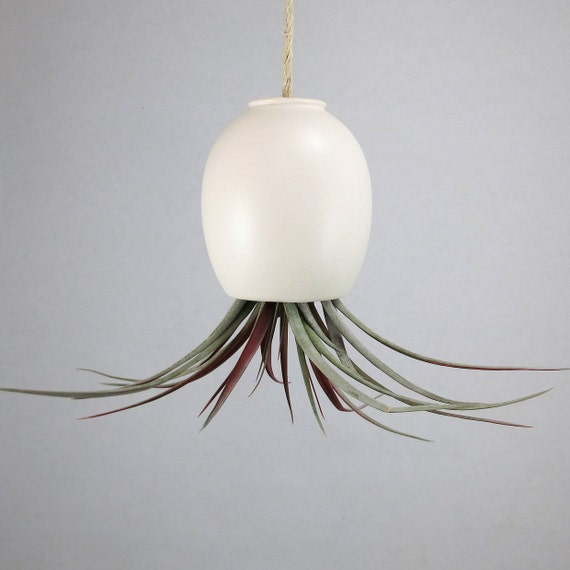 Ceramic Air Plant Vase - Hanging AirPlant Pod (tm) - Silky Matte White by mudpuppy