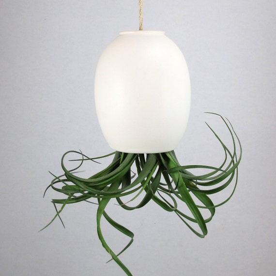 LARGE Hanging Air Plant Pod (tm)  - Silky Matte White