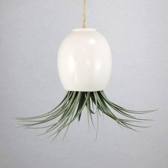 RESERVED - Hanging Air Plant Pod Planter (tm) TRIO  - 3 small matte white pods and 3 free air plants