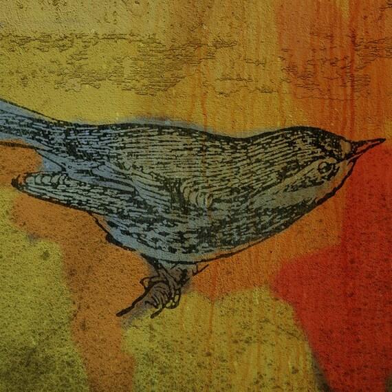 Warbler No. 1