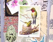 Bird-Art Collage-Handmade Large Paper Tag 4x6-Humming Birds Nest Gift Tag- Bird Art Tag-Birds-Birdd Original Collage
