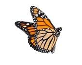 Monarch Butterfly Vinyl Decal Design 2