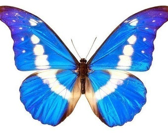 Bright Blue and White Butterfly Vinyl Decal