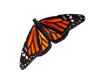 Monarch Butterfly Vinyl Decal Design 1 - Varying Sizes