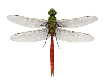 Red Dragonfly Vinyl Wall Decal Sticker - Varying Sizes