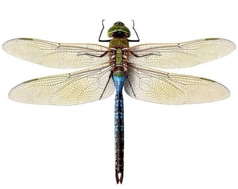 Blue Green Dragonfly Vinyl Wall Sticker Decal 12 inches Wide