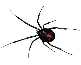 """6"""" x 4"""" Black Widow Spider Decal Design 4"""