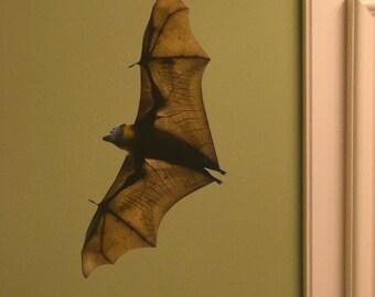 Flying Fox Bat Vinyl Wall Decal