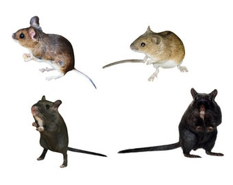 4 Mice Vinyl Wall Decal Set