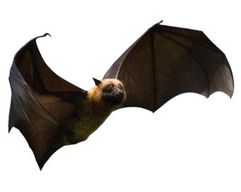 Set of 6 Flying Fox Bats Vinyl Wall Decals