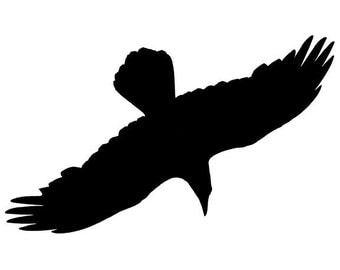 Diving Crow Wall Decal Design