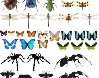 The 55 Piece Mega Bug Collection