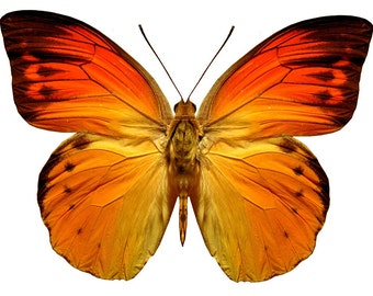 Bright Orange Butterfly Decal