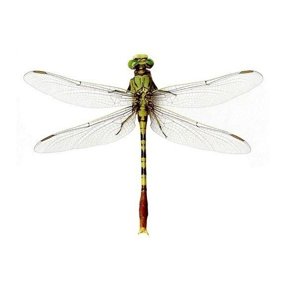 Bright Green Dragonfly Vinyl Wall Decal Sticker 12 inches Wide