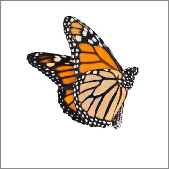 Monarch Butterfly Design 3 Vinyl Decal