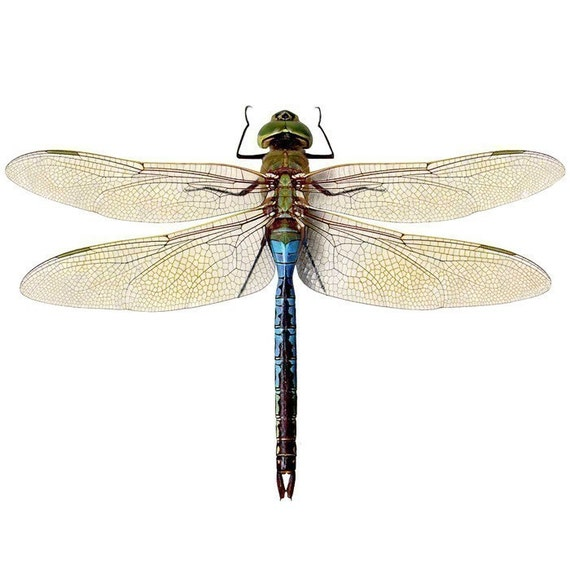 Blue Green Dragonfly Vinyl Wall Sticker Decal - Varying Sizes