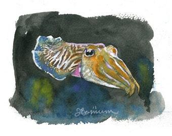 Pharoah Cuttlefish, Cephalopod series- illustration print in multiple sizes