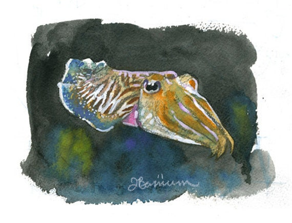 Pharoah Cuttlefish, Cephalopod series- illustration print in multiple sizes