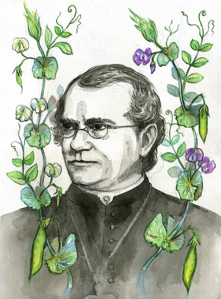 Gregor Mendel with pea plants portrait scientist series by JBarnum