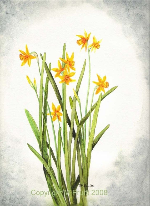 Original Watercolor Daffodil Painting Dw By M Pruitt