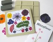 "Microfleur Microwave Flower Press 5x5"" - For Pressing Flowers in Microwave - pressed flowers"