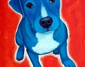 Fine Art Print 8x10 of Blue Pit Bull Terrier- Innocent to benefit Rescue