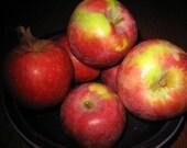Macintosh Apple - 20 Premium Hand Dipped Incense Sticks or Cones