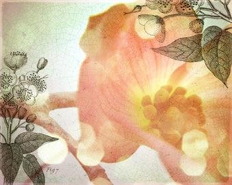 SALE Fresh Flowers - Blossom -- 8x10 print