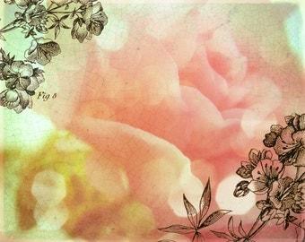 SALE Fresh Flowers - Rose -- 8x10 print