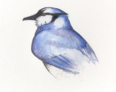 blue jay original watercolor painting 5x7 inches