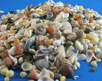 "Craft Seashells, 3"" x 4"" bag filled with Assortment of Small Seasells, 1/8"" to 1-1/4"", Great for Shell Crafts and Art Projects, DIY Weddings"