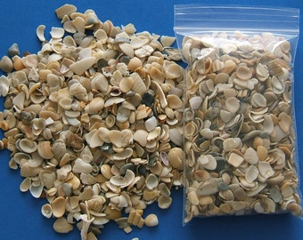 "Craft Shells, Under 1"", Beach Seasell Pieces for Crafts, 4"" x 6"" bag full, DIY Seashell Crafts, Vase Filler, Potted Plant Garden Accessories"