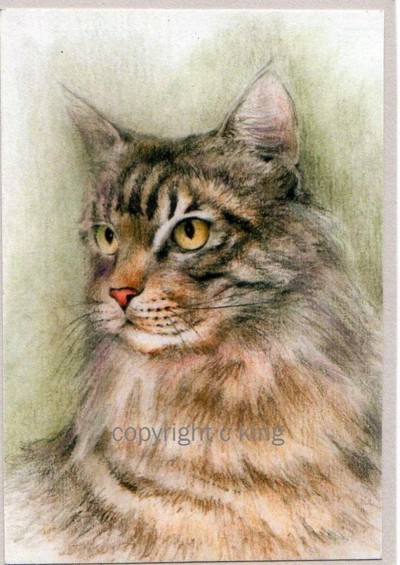 ACEO limited edition print Tabby Maine Coon Cat art card