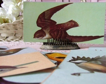 Vintage Bird Flashcards (package of 3)