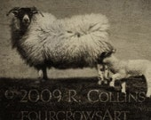Tintype Series, Sheep, Limited Edition Print
