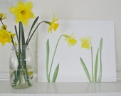 RESERVED FOR CARRIE Yellow Spring Flowers, Daffodil Painting, Watercolor Painting, Botanical Art, Spring Home Decor, Mother's Day
