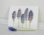 Botanical Art, Watercolor Painting, Purple Spring Flower Painting, Purple Grape Hyacinths, For Mother's Day, Home Decor