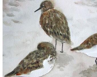 Bird Art Painting, Sandpipers, Shorebirds on Beach Art, Original Watercolor Painting, Home Decor, Cottage Decor