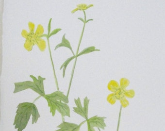 Watercolor Botanical Yellow Buttercup Flowers Original Painting