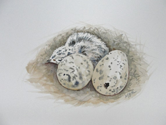 Bird Art, Nature Art, Watercolor Nest and Eggs Painting, Baby Bird, Baby Gull, Original Watercolor Painting, Home Decor, Natural History