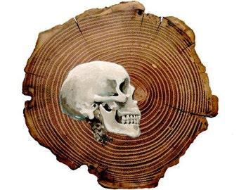 SALE- Skull- Print of Original Painting