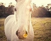 horse photography fine art horse photograph sunlight farm country rustic horse portrait babiekins magazine Sunlit horse - eireanneilis