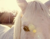 horse photography - fine art horse photograph, white horse, farm decor, animal nursery decor, sunflare, yellow decor - A Horses Eyes - eireanneilis