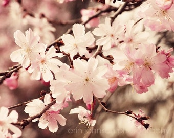 pink cherry blossom flower photography, nature photograph, pink home decor, large living room wall art, girls room art, spring decor