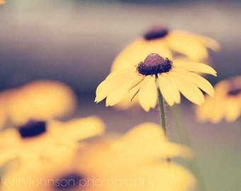 flower photography, yellow home decor, nature photography, yellow wall art, blackeyed susan, spring home decor
