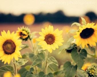 landscape sunflower photography, yellow home decor, rustic home decor, flower photo, nature photography, Sunflower Fields