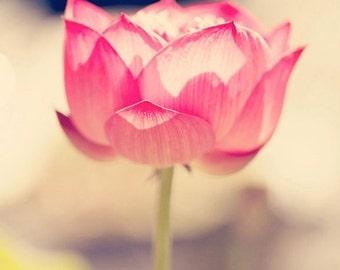 flower photography, fine art flower photograph pink nursery art pink flower nature photo wall art home decor Pink Lotus